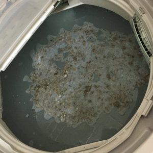 洗濯槽 汚れ